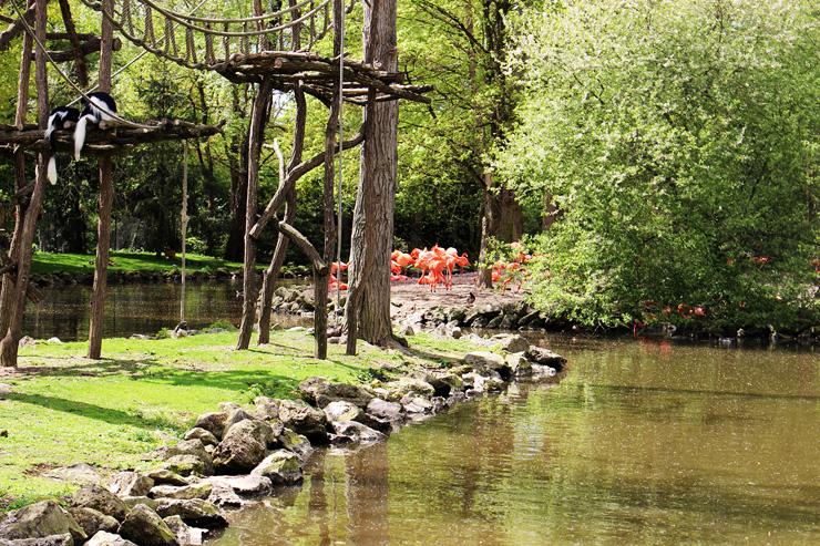 Une journ e au zoo de beauval aylee for Chambre zoo de beauval